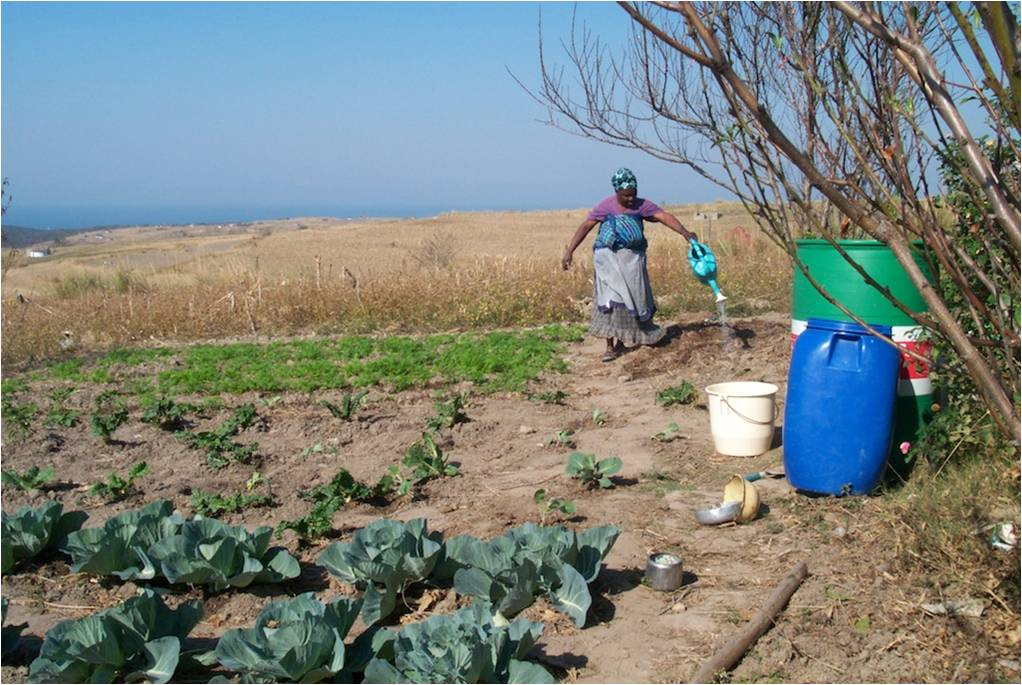 Siyazondla member Nongenile Gongqose at work in her homestead garden